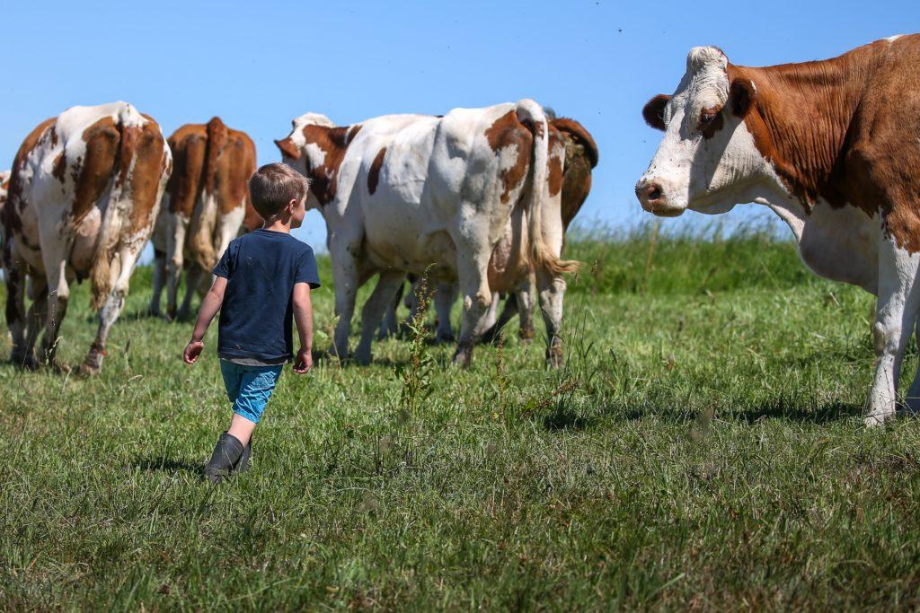 Soutien à l'agriculture : la COR à l'initiative